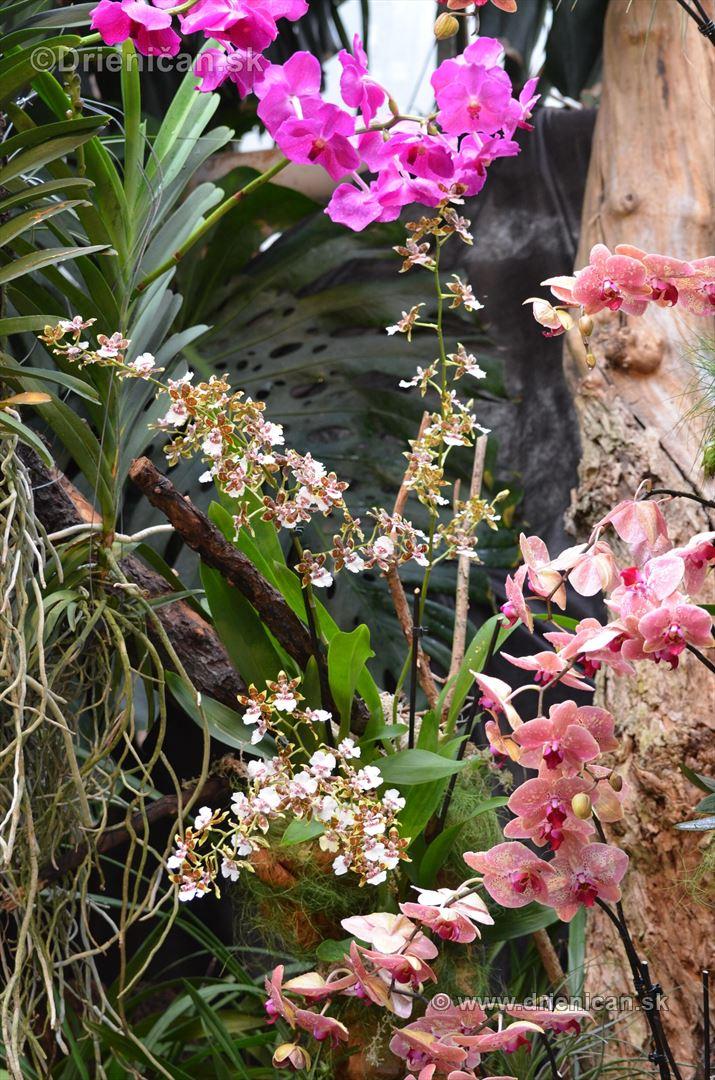 Vystava orchidei KE_76