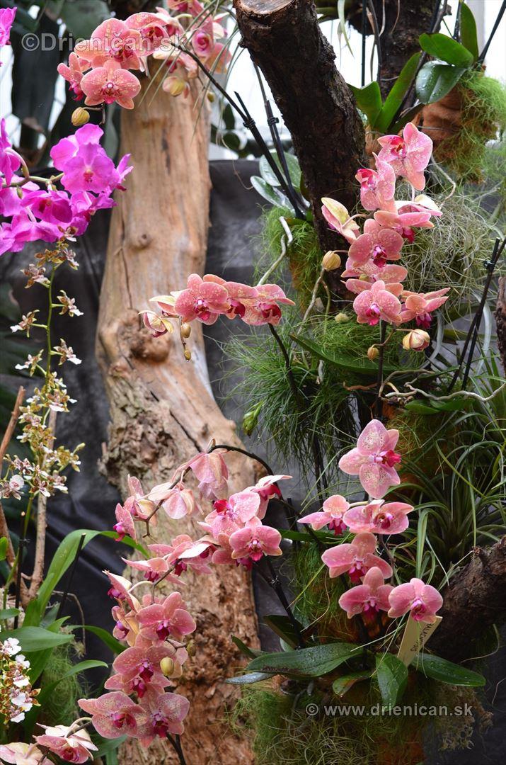 Vystava orchidei KE_77