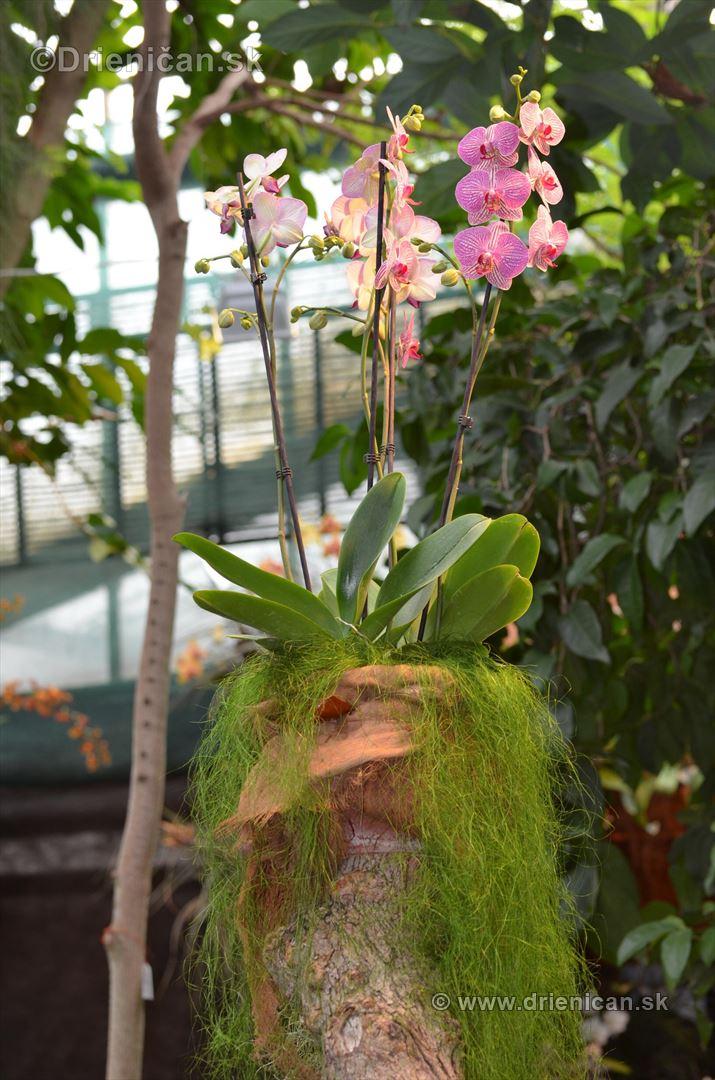 Vystava orchidei KE_78