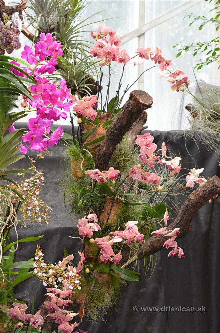 Vystava orchidei KE_81