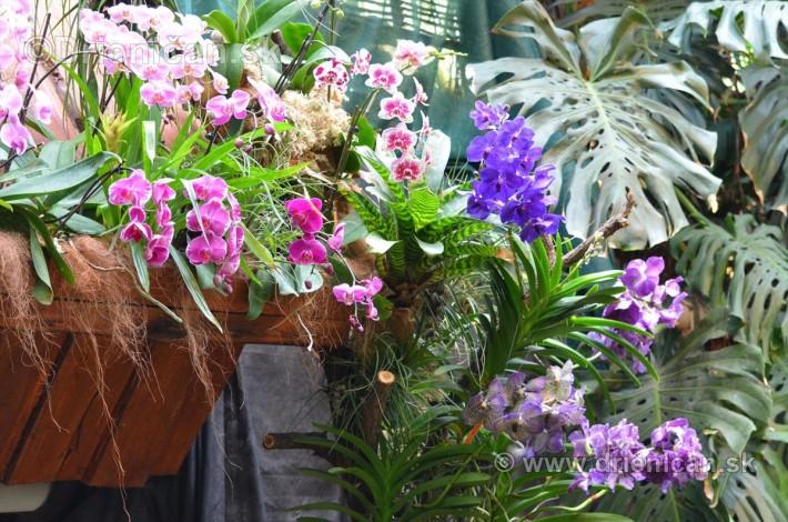 Vystava orchidei KE_82