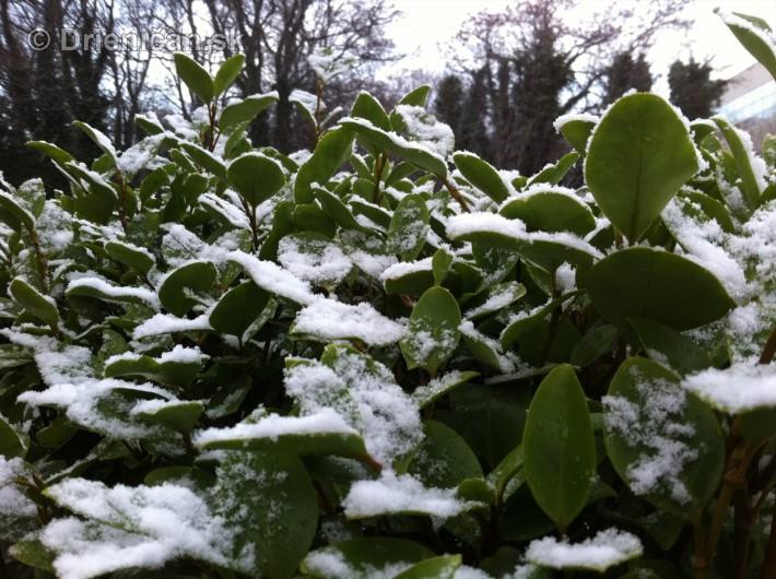 dublin snow_2