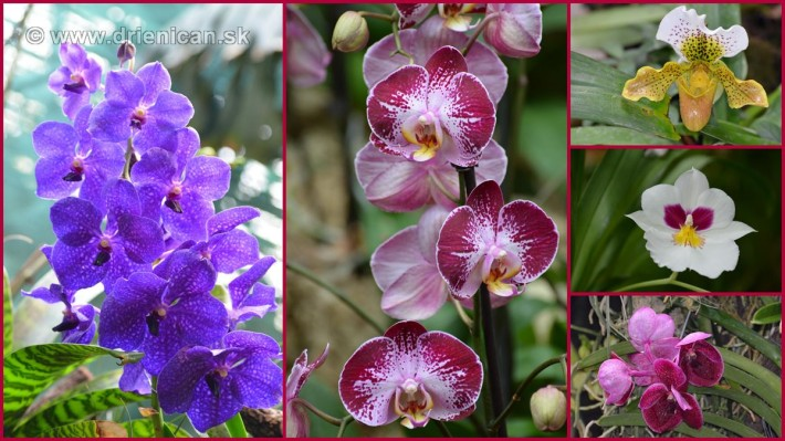 Orchidea foto koláž