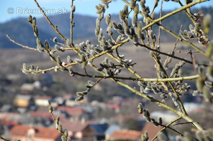 drienica foto marec_13