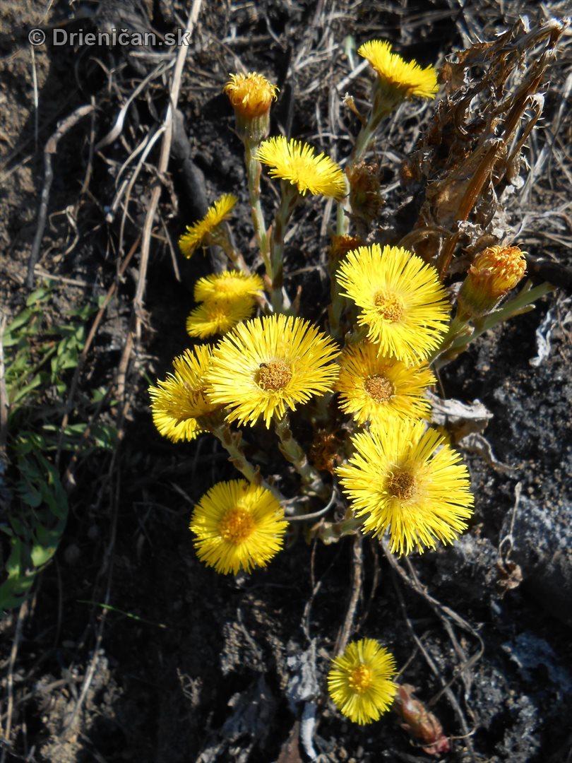 jarne lucne kvety_5
