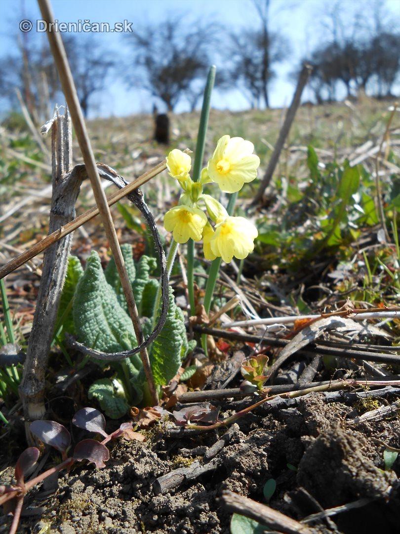jarne lucne kvety_6