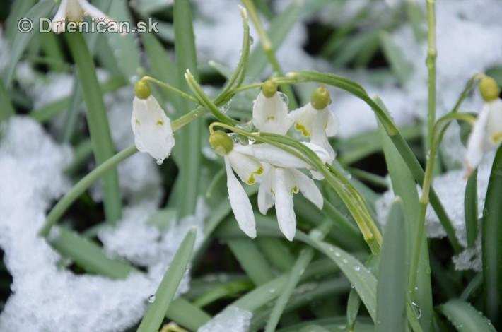 sneh v marci_03
