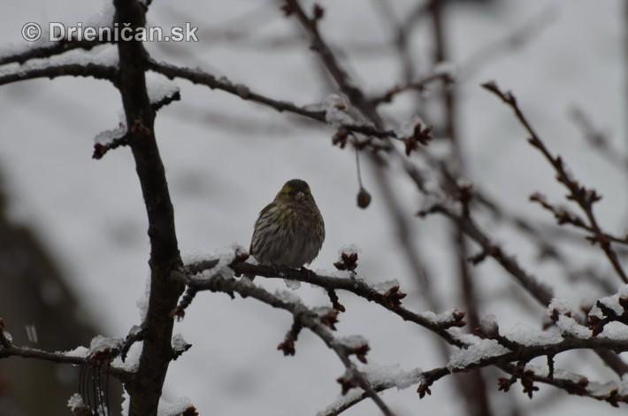 sneh v marci_05