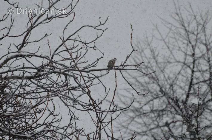 sneh v marci_11