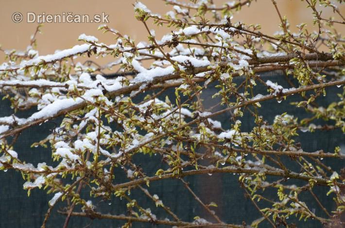 sneh v marci_15