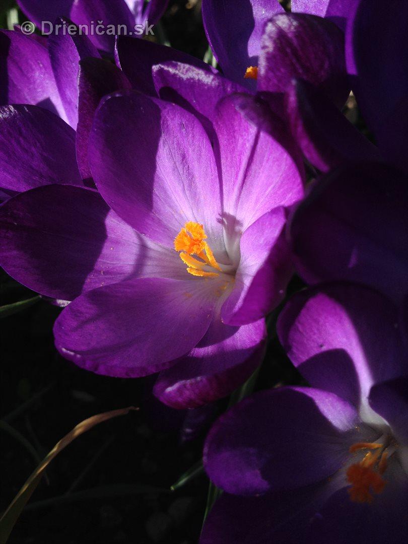 zahrada v marci_3