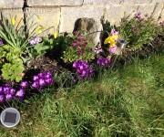 Marec v záhradke