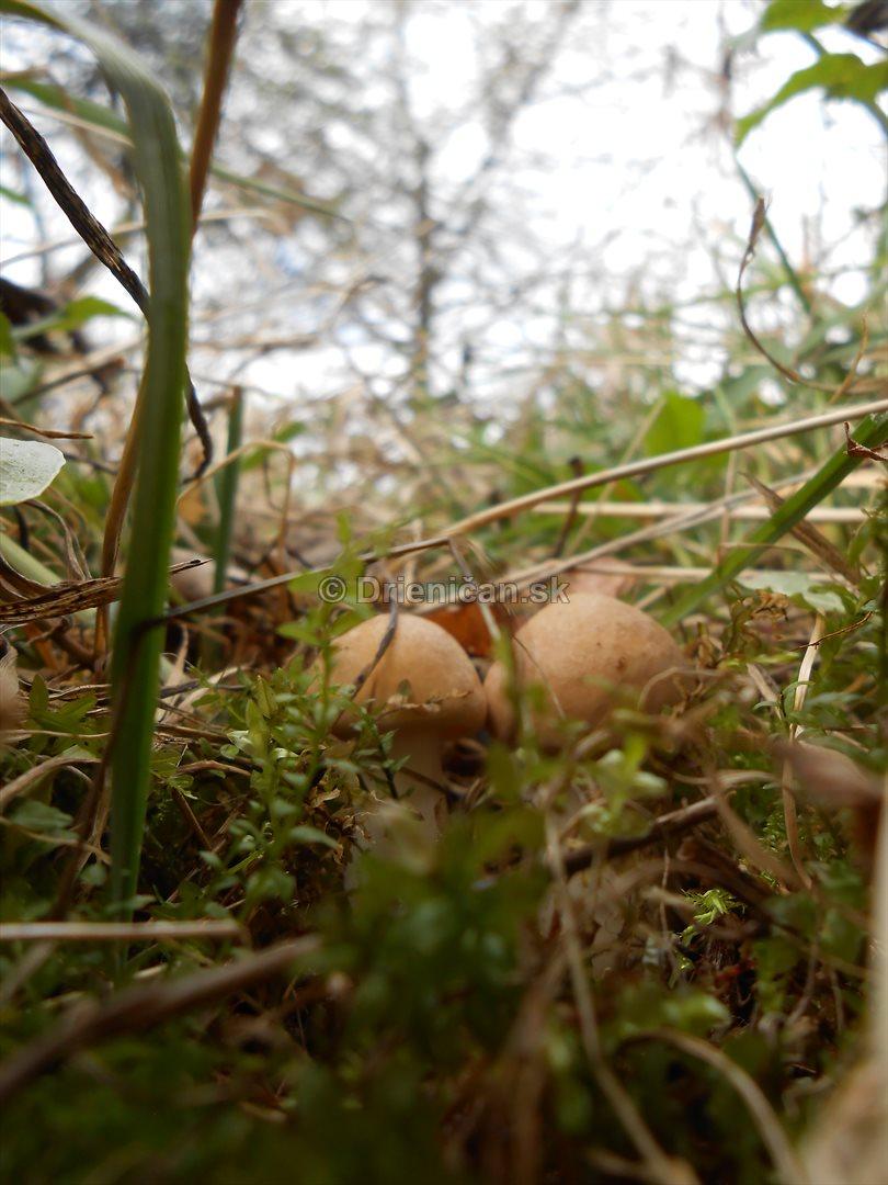majovky v trave_04