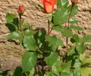 Záhradka pani Mačišákovej