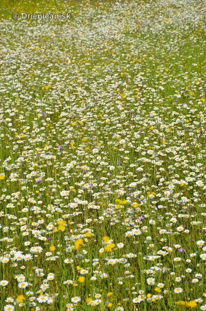lucne kvety_16