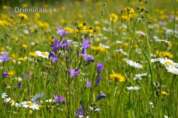 lucne kvety_19