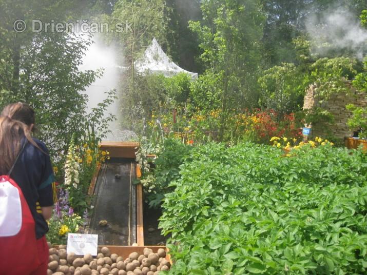Bloom Ireland Garden Festival_25