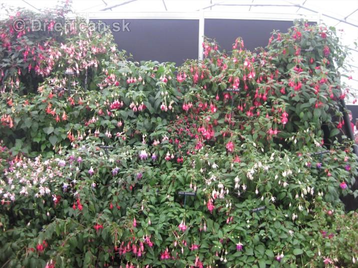 Bloom Ireland Garden Festival_57