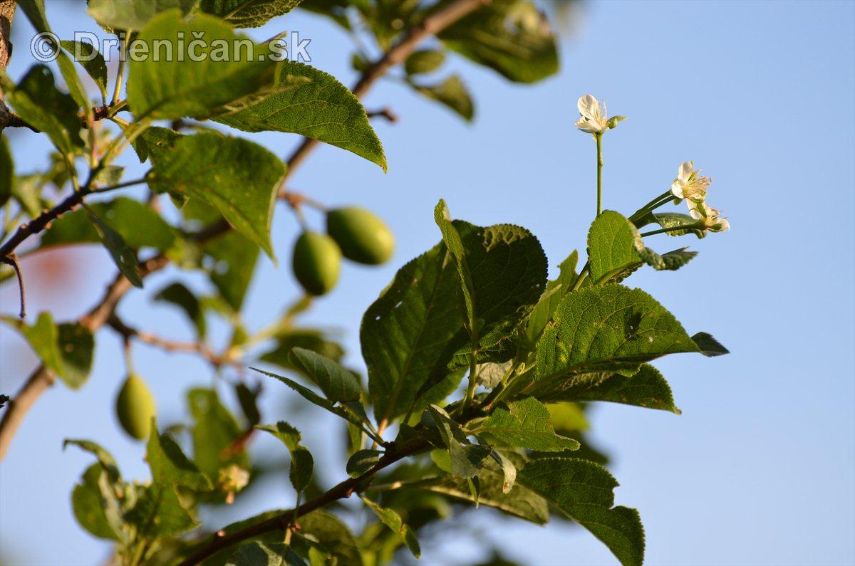 Rozkvitnuté stromy v lete