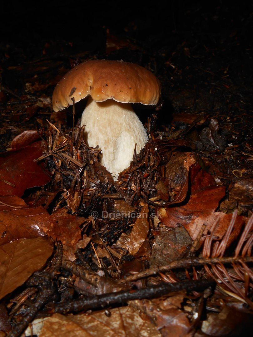 Hriby v hmlistom lese_03