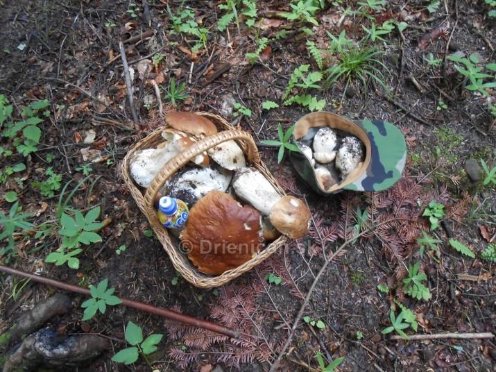 Hriby v hmlistom lese_23