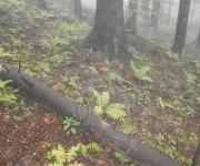 Hríby v hmlistom lese