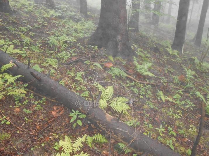 Hriby v hmlistom lese_30