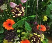 WAFA-Kvetinová odysea