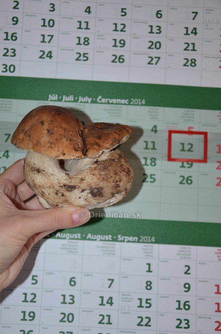 hriby pre kalendarom_16