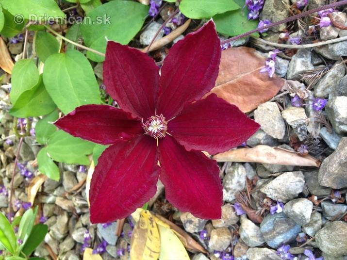na prestavke v zahrade_08