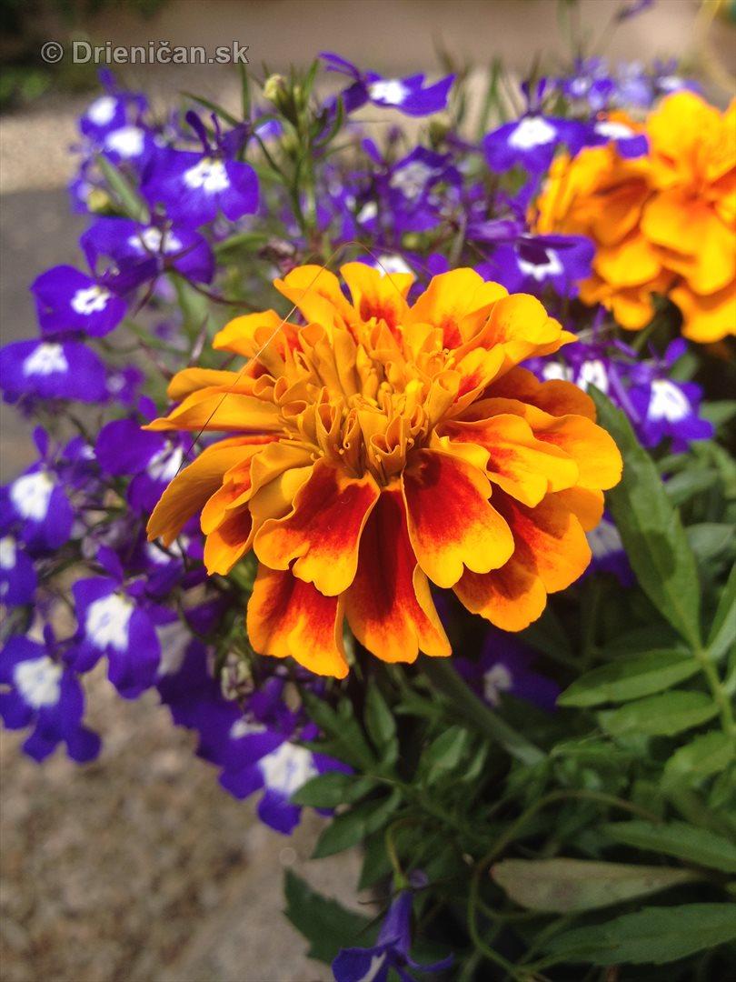 na prestavke v zahrade_09
