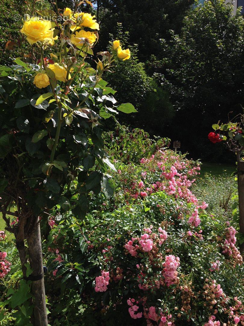 na prestavke v zahrade_23