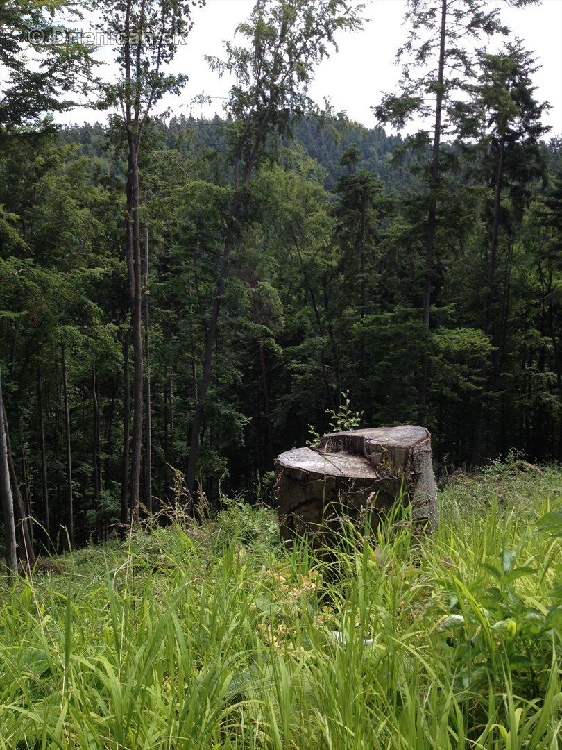 V tichom lese potok tecie_03