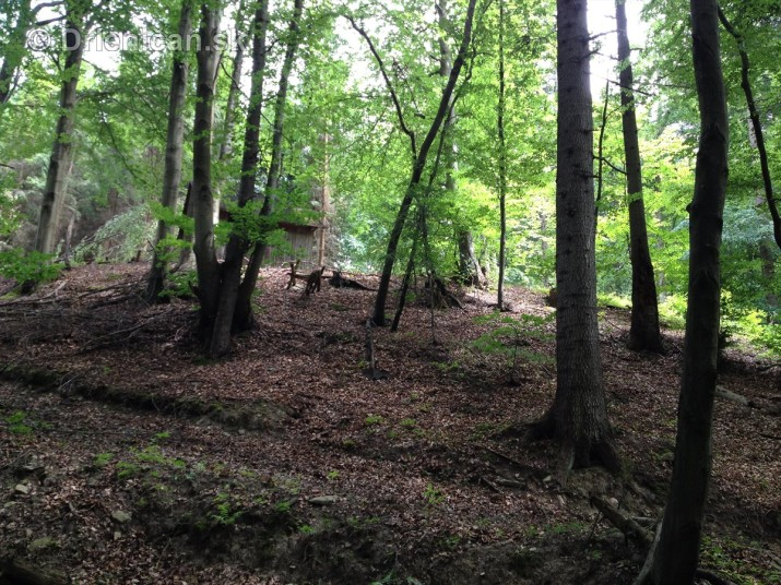 V tichom lese potok tecie_12