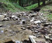 V tichom lese potok tečie