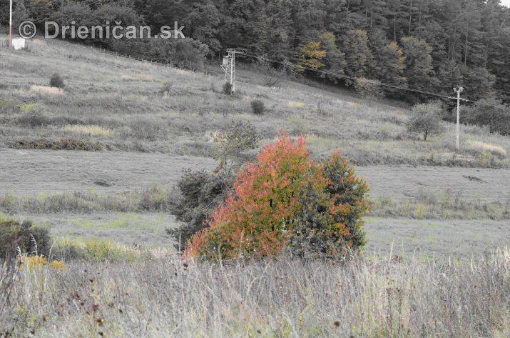 Drienica v jeseni foto_04