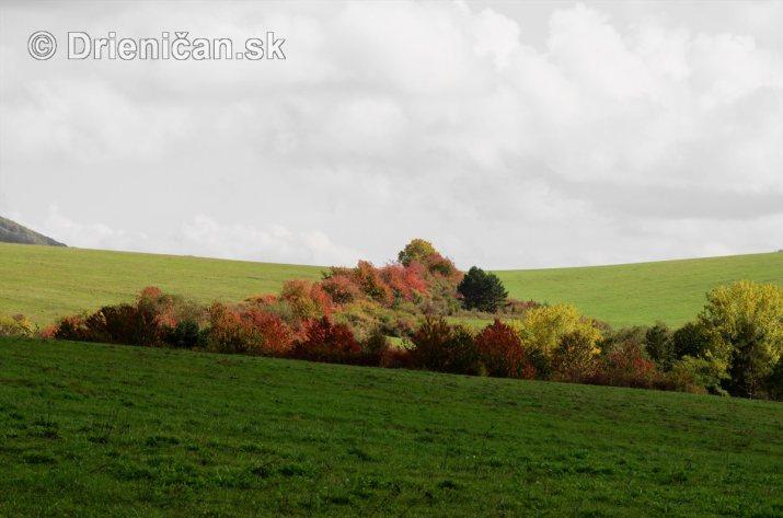 Drienica v jeseni foto_10