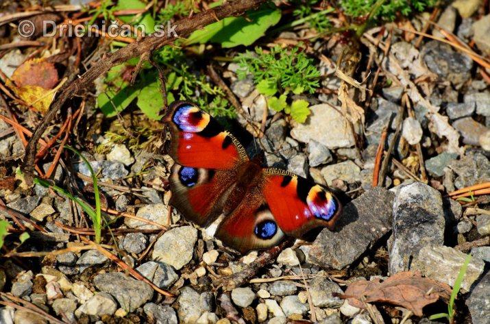 Drienica v jeseni foto_16