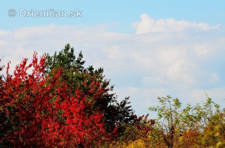Drienica v jeseni foto_17