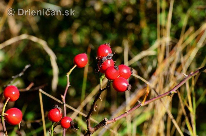 Drienica v jeseni foto_23