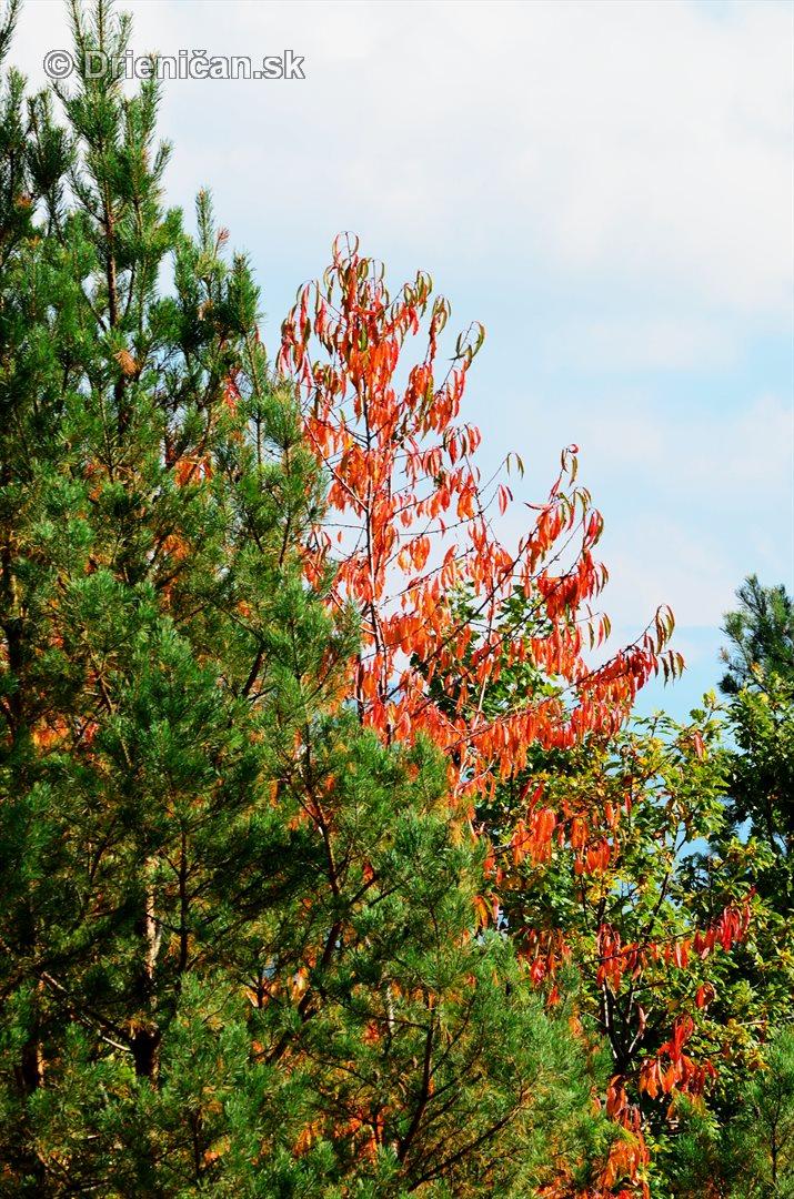 Drienica v jeseni foto_43