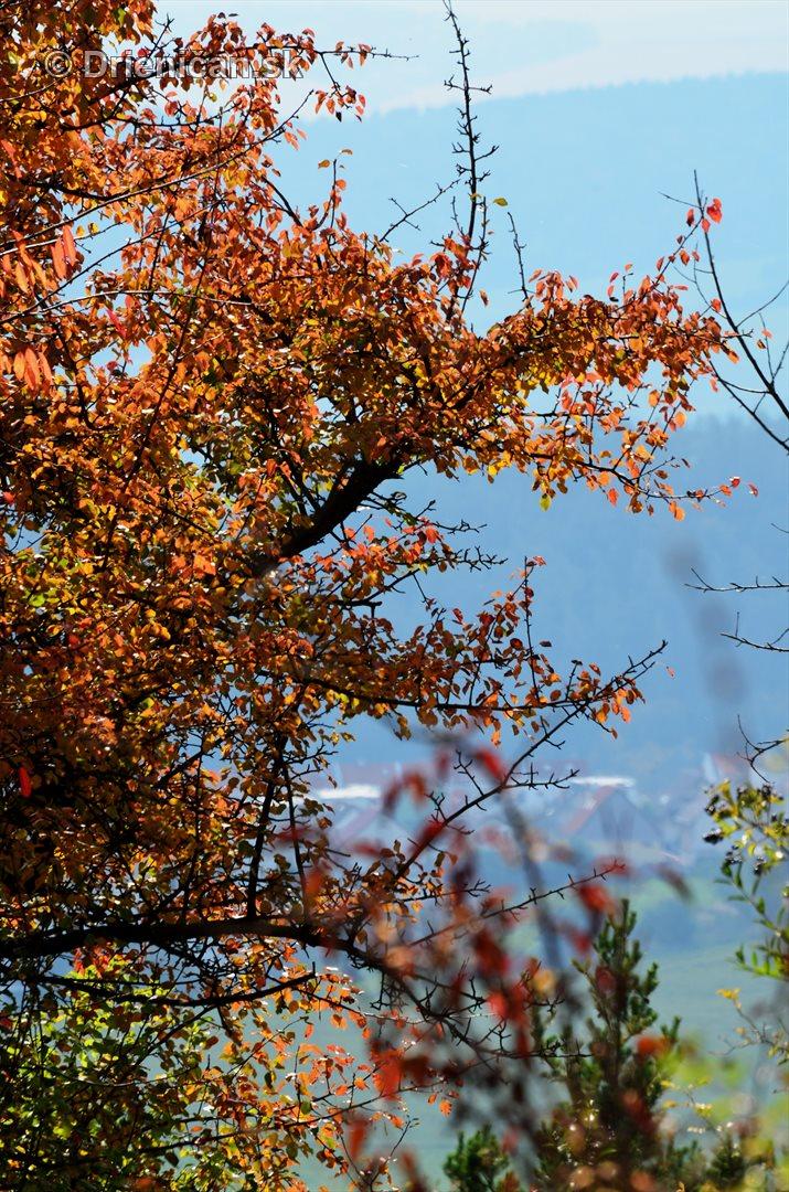 Drienica v jeseni foto_45