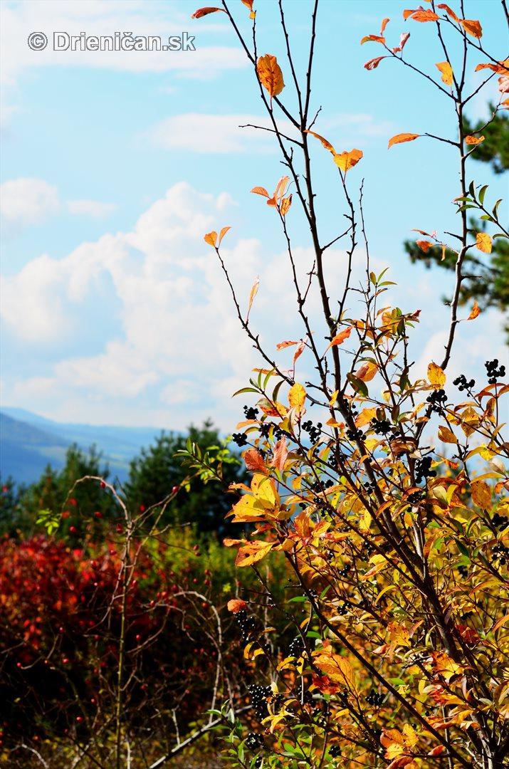 Drienica v jeseni foto_50