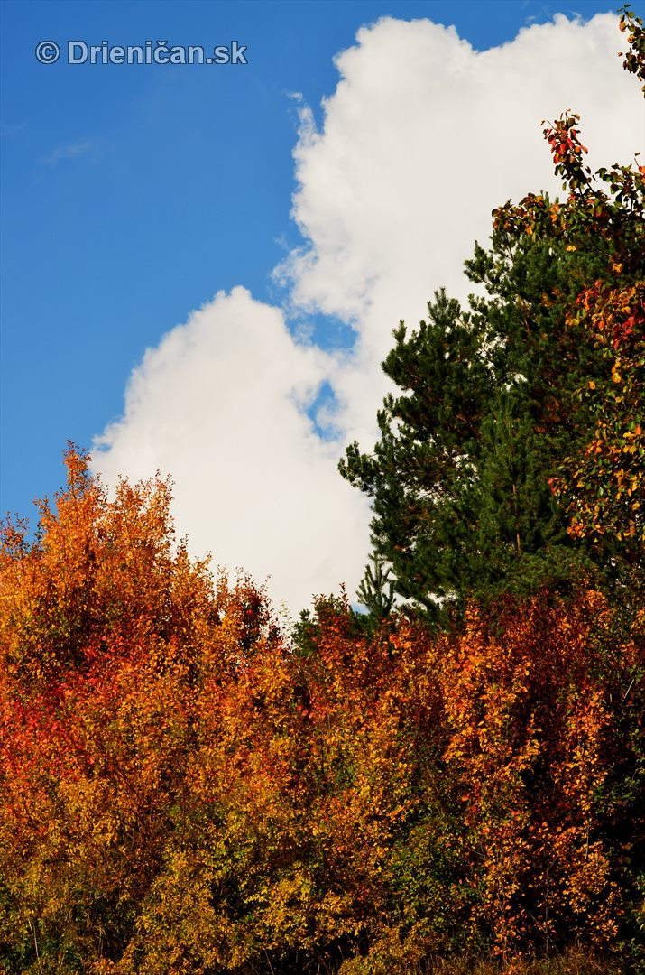 Drienica v jeseni foto_61
