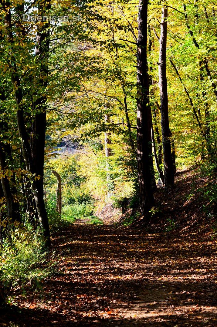 Drienica v jeseni foto_62