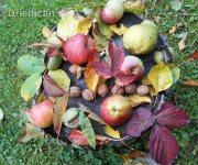 Jesenná úroda