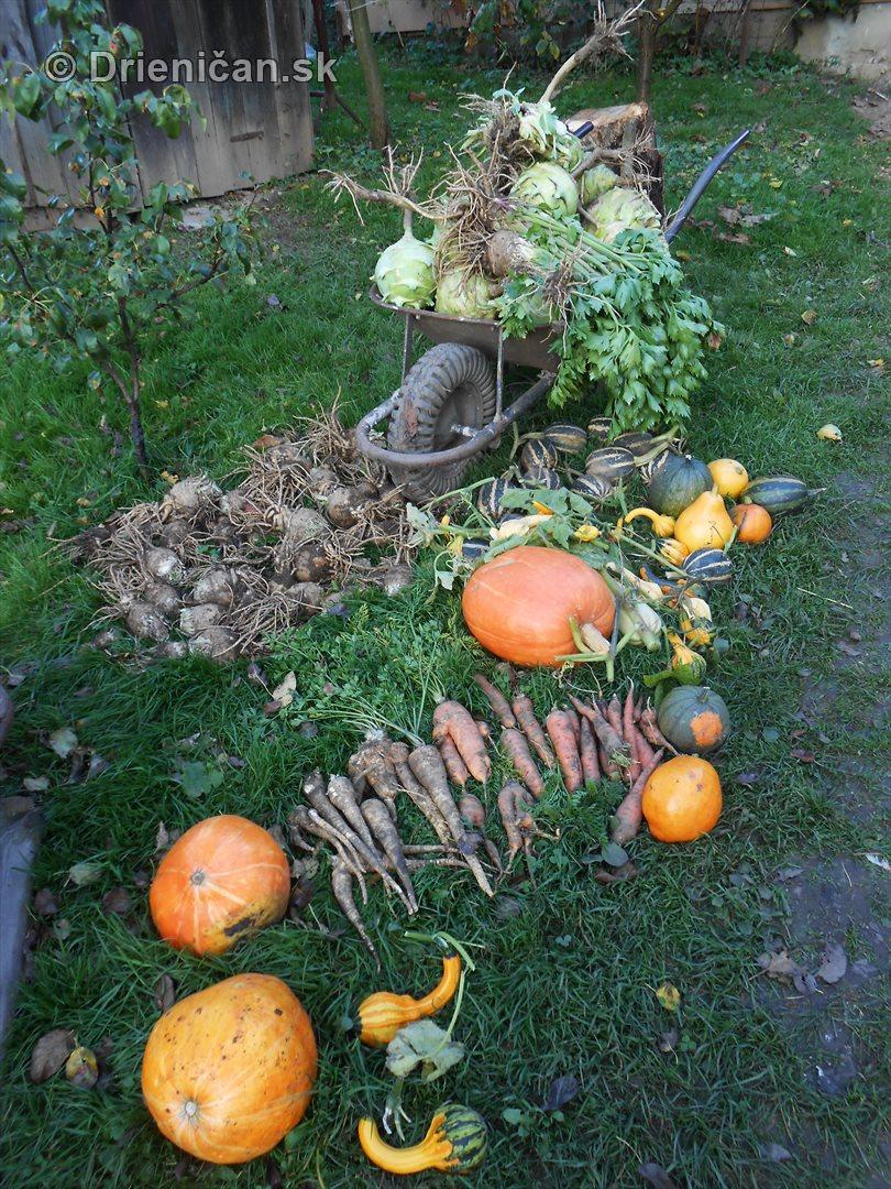 Jesenna uroda_20