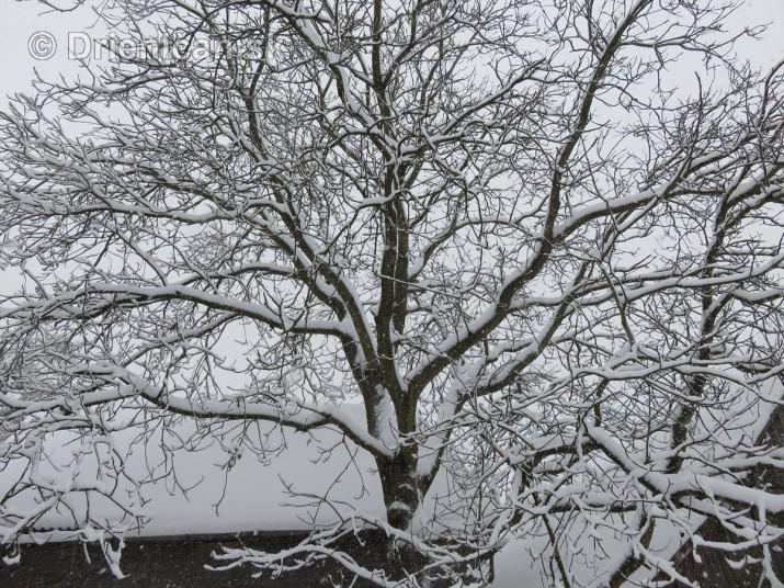 Januarovy sneh na Drienici_10
