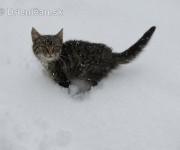 Mačkice na snehu
