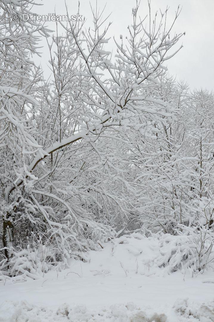 Drienica Lysa pod snehom_08